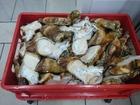 Скачать foto Корм для животных Путовый сустав говяжий 33765165 в Волгограде