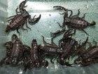Изображение в Домашние животные Другие животные Краснодарский питомник рептилий и экзотических в Волгограде 3000