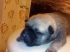 Изображение в Собаки и щенки Продажа собак, щенков Отдам в добрые руки щенка - мальчика[беспородный]. в Волгограде 0