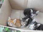 Фото в Кошки и котята Продажа кошек и котят Отдам в добрые руки красивых котят 3 мальчика в Волгограде 0