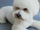 Просмотреть фотографию Косметологические услуги Стрижки собак и кошек с доставкой 39737590 в Тюмени