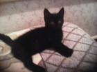 Свежее фотографию Отдам даром - приму в дар Милые черные кошечки-лапочки 76051125 в Волгограде