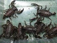 Продажа рептилий в Волгограде Краснодарский питомник рептилий и экзотических жив