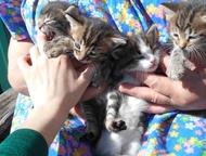 Котята-малыши в добрые руки Отдадим малышей в добрые, заботливые руки!   Рождены