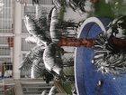 Свежее foto Земельные участки 30 соток по 40 р, сотка вс отскочное хлевенског р, липецкой , садовая 19 34315666 в Липецке