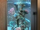 Увидеть фото Аквариумы Продам потрясающий цилиндрический аквариум 93л 42695757 в Воронеже