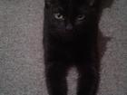 Новое foto Потери Пропала любимая черная кошка! 68034075 в Воронеже