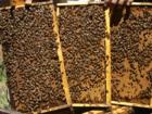 Новое фото Другие животные Пчелопакеты Бакфаст, Карпатка, Карника оптом и в розницу 68921165 в Воронеже