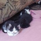 Чудесные котята ищут хозяев