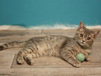 Смотреть фотографию Отдам даром Милый котенок 33661188 в Воронеже