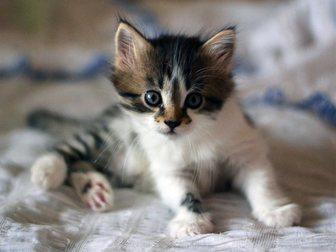 Уникальное изображение Отдам даром котята 33771363 в Воронеже
