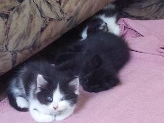 Уникальное фото Отдам даром - приму в дар Чудесные котята ищут хозяев 36289891 в Воронеже