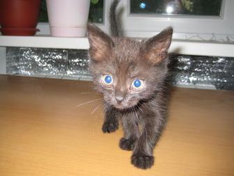 Свежее фото  Отдам в хорошие руки котенка (девочку) 39720550 в Воронеже
