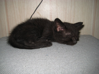 Увидеть foto  Отдам в хорошие руки котенка (девочку) 39720550 в Воронеже