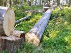 Просмотреть foto  Продам бревна сухостоя, Карельская сосна, Кело, 34573110 в Петрозаводске