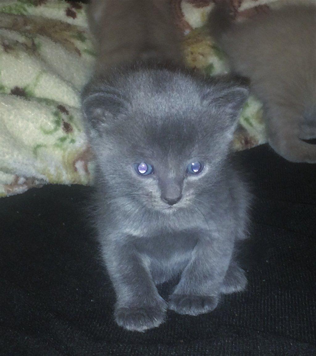 Объявление продам котенка зеленоград газета базар уссурийск подать объявление