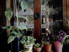 Смотреть фотографию Отдам даром - приму в дар комнатные растения 32954102 в Зеленограде