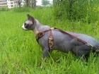 Смотреть фотографию Вязка кошек вязка с канадским сфинксом 67666215 в Зеленограде