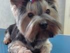 Фотография в Собаки и щенки Стрижка собак Профессиональная стрижка животных. Модельная, в Железнодорожном 1200