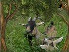 Скачать бесплатно фото Другие животные продам 33489762 в Златоусте